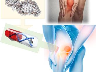 「HIF-2α を抑制し軟骨恒常性を制御するマイクロRNA-455を発見」― 変形性関節症の核酸治療法開発へ期待 ―をNat Communに発表