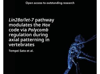 「脊椎動物のボディープランの上位遺伝子プログラムを解明」 ― Lin28aによるRNAとエピジェネティックス両階層の制御―をeLifeに発表