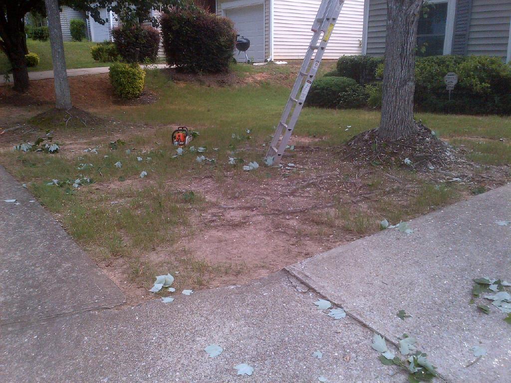 Tree has taken over lawn