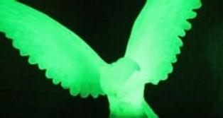 phosphorescence-e1437737129209.jpg
