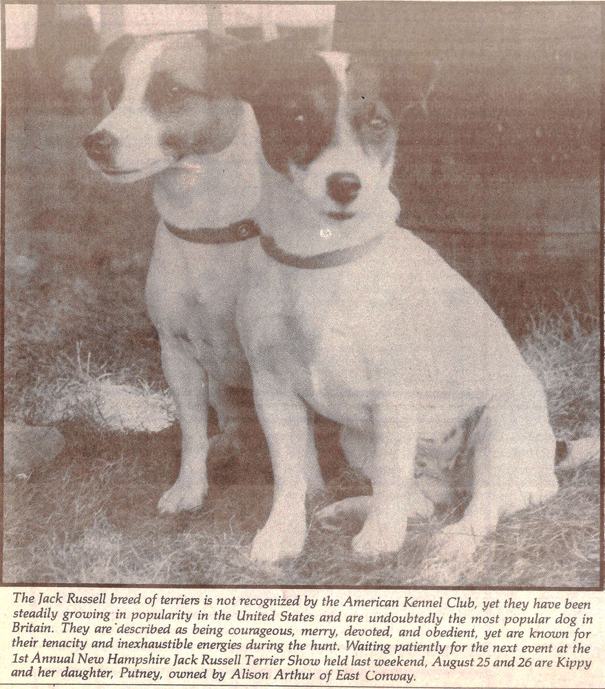 Jack Russell Terriers Jekyll And Hydes Of The Dog Kingdom
