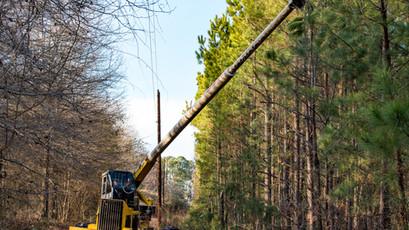 Tree Trimming & Land Development