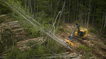 Tree Removal & Land Development