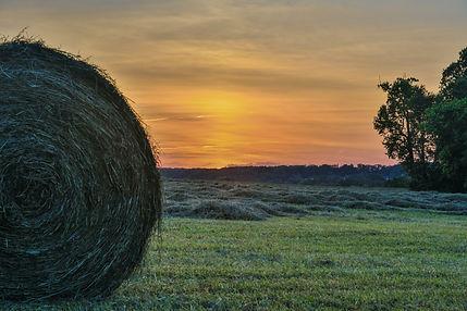 MD Farm - Image - David Dilbert - Pexels