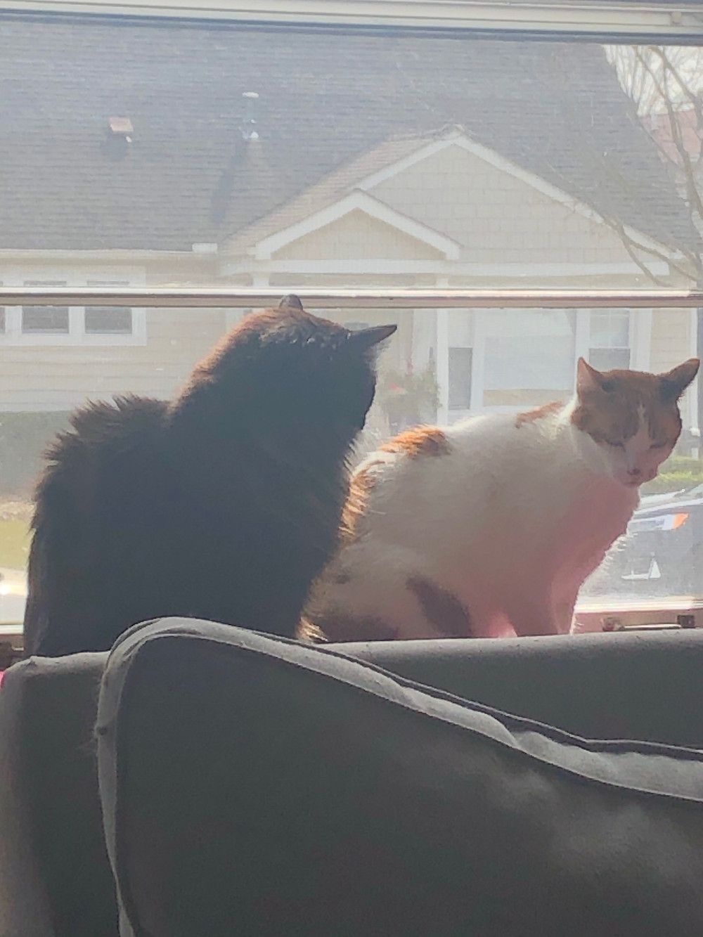 my cats, oblivious to the horrors