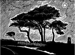 James Dodds, Night Trees