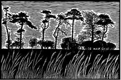 James Dodds, Scots Pines