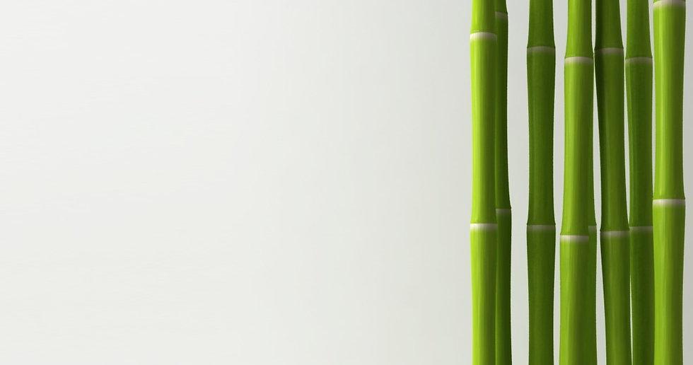 Bamboo%2520_edited_edited.jpg
