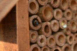 mason-bee-281185_1280.jpg