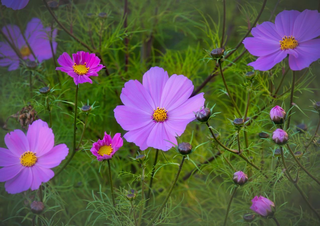 Open Flower