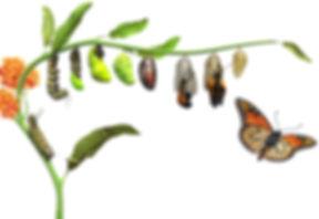 DK_butterfly_Lifecycle_Rev05_affmr0.jpg