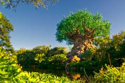 Disney Animal Kingdom Tree.JPG