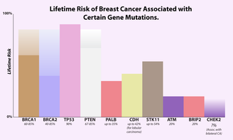 Lifetime risk of breast cancer for different gene mutations