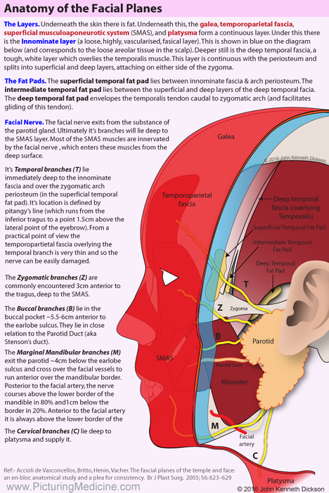 The Fascial Planes of the Temple and Face
