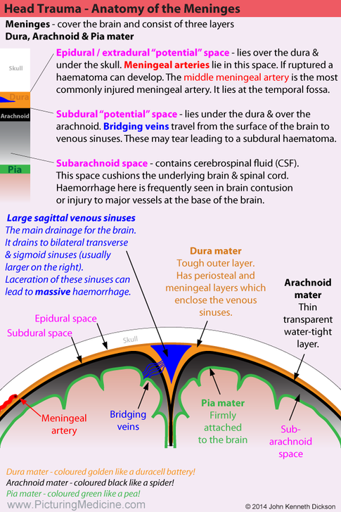 Anatomy of the Meninges