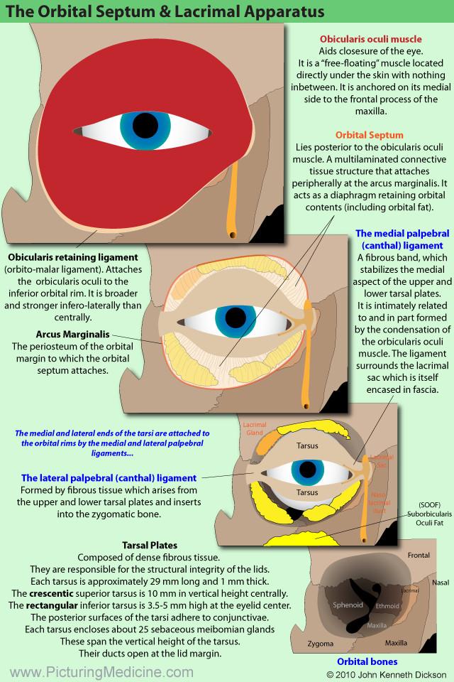 Picturing Medicine :- Anatomy
