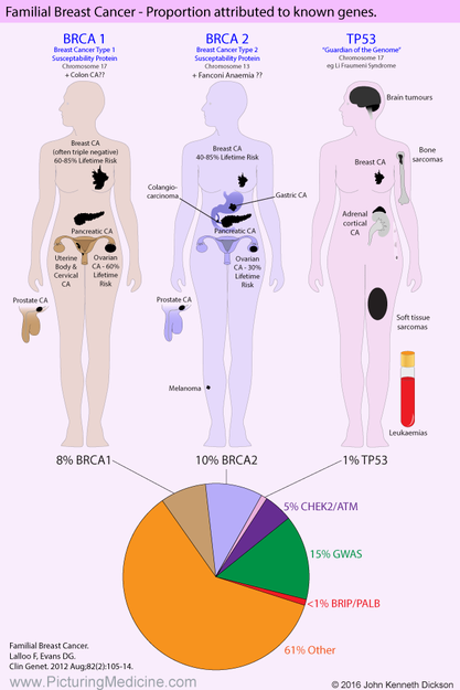 Proportions of Differing Genes Mutations associated with Breast Cancer