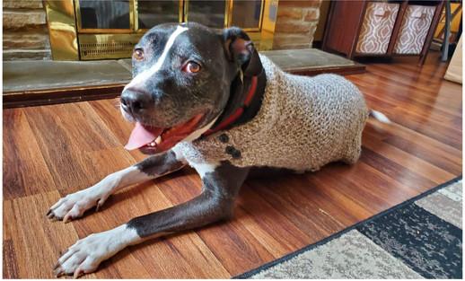 Medium Dog Coat
