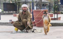 Monkey Dancer (Izzy Zaidi photo)IMG_2904