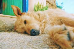 Centro de Retiros Cão.jpg