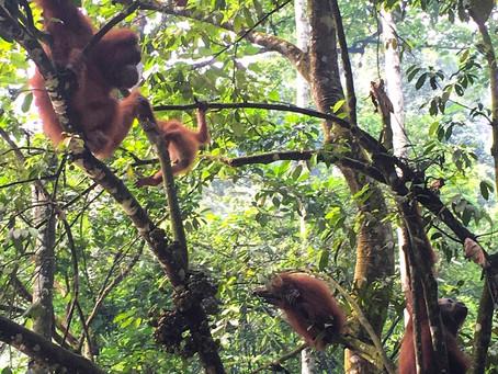 Jungle Trekking in Bukit Lawang, Sumatra