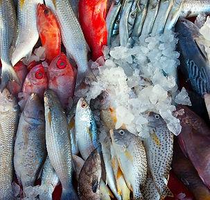 FISKEMEGLING.jpg