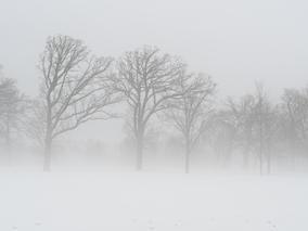 Watchers in the Mist