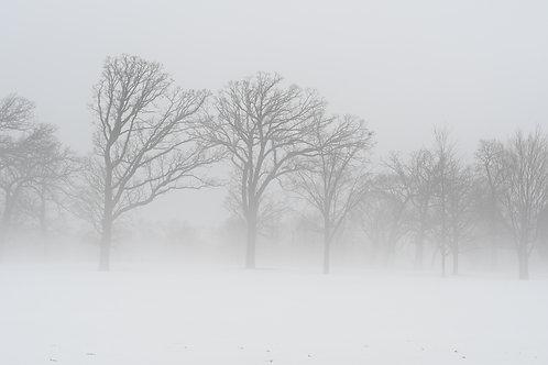 "Mattila, Terri     ""Watchers in the Mist"""