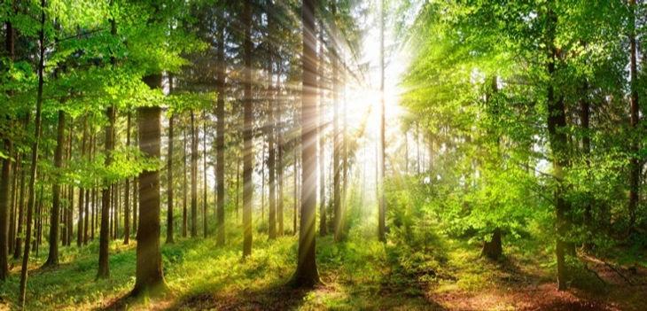 Green Earth_edited.jpg