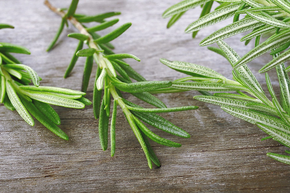 Rosemary%20Sprig_edited.jpg