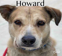 popotogo Howard.jpg