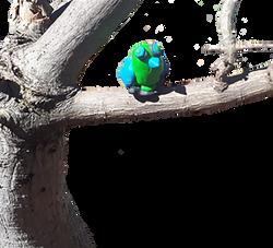 O papagaio na árvore