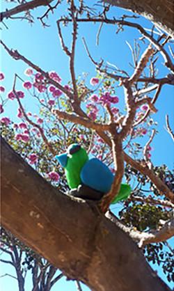 Evidências de aprendizagem: O Papagaio