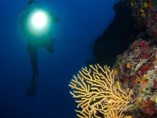 CFWA Underwater - Get Close Up!