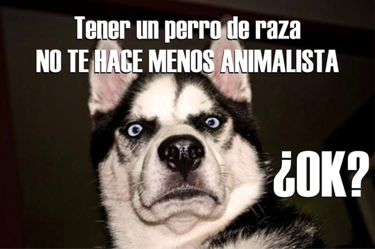 Bonilla meme3.jpeg