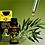 Thumbnail: Aceite esencial del Árbol de té puro