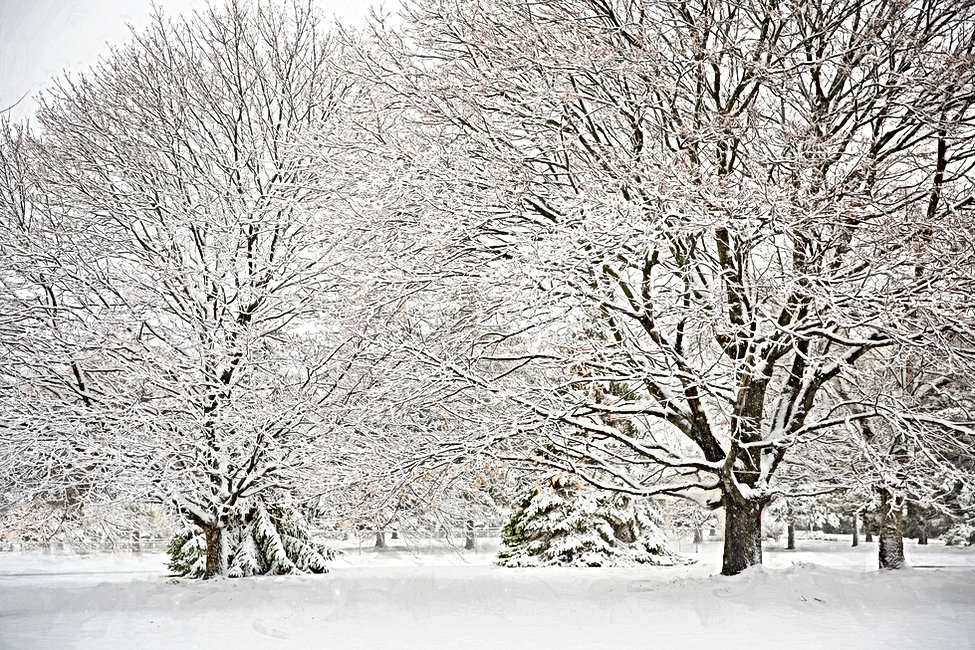 snowy-4666368_1920.jpg