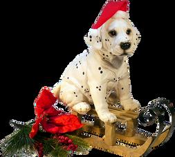 Pets e o perigo dos enfeites de Natal