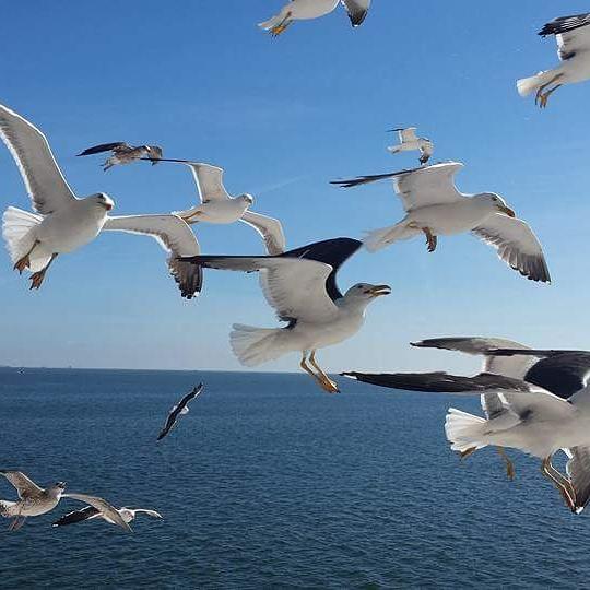 Show de gaivotas