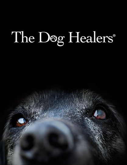 dog healers cover.png