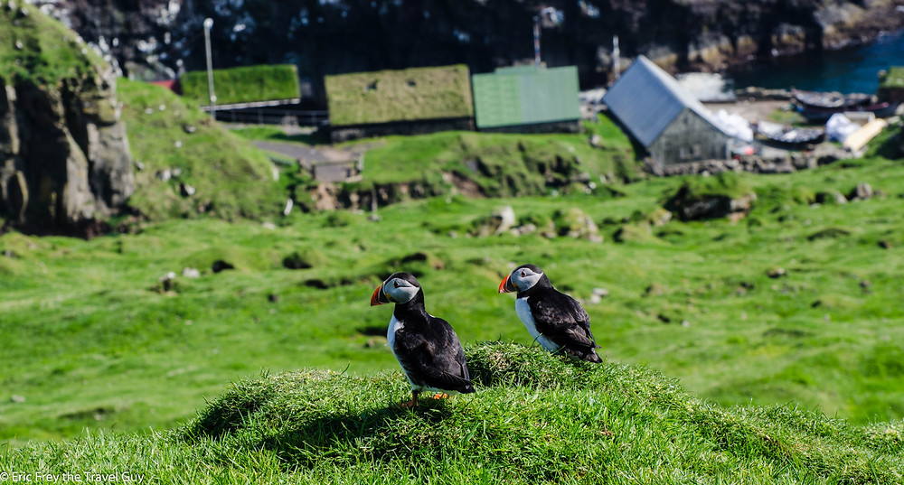 Puffins overlooking Mykines village. Likely deciding on where to get coffee.