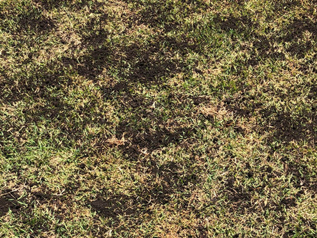 Cobertura de gramados