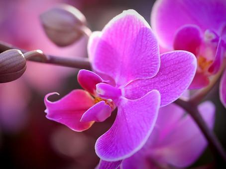 5 dicas para cultivar orquídeas