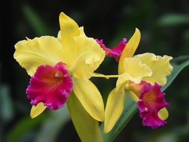 Orquídeas – História e ecologia