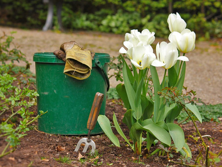 Paisagista ou jardineiro: De quem você precisa?