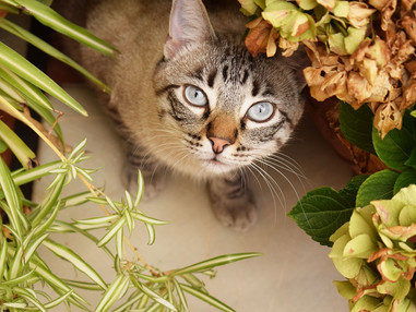 Plantas tóxicas para animais