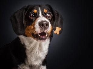dogs-catching-food-photos-frei-schnauze-