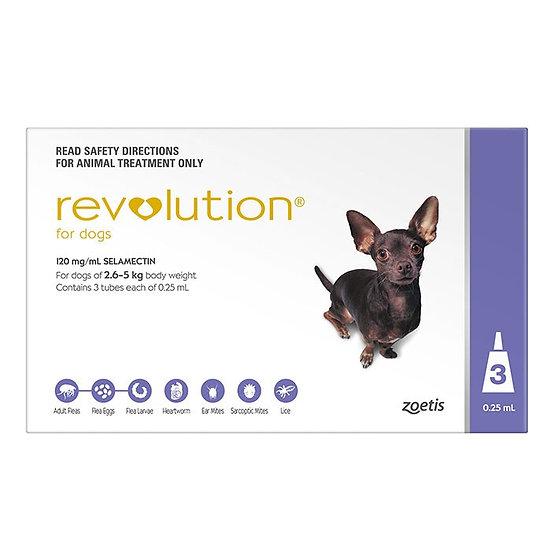 Revolution Purple for Small Dog