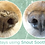 Thumbnail: Natural Dog Company Snout Soother