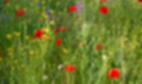 Capture d'écran 2020-04-03 à 11.45.37